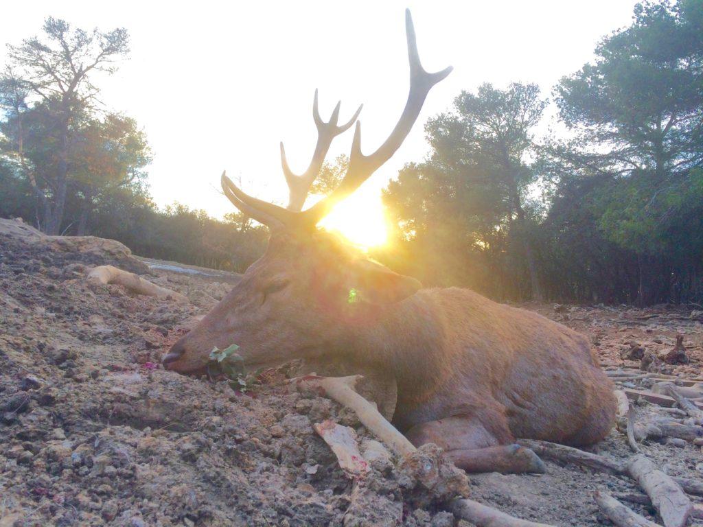 chasser sous le soleil de provence