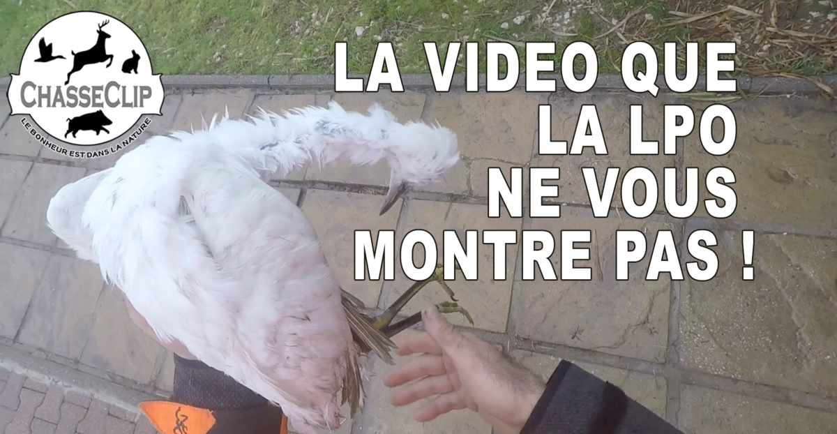 La video que la LPO ne vous montre pas !